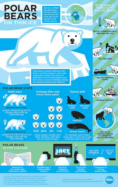 Polar Bears: On Thin Ice infographic