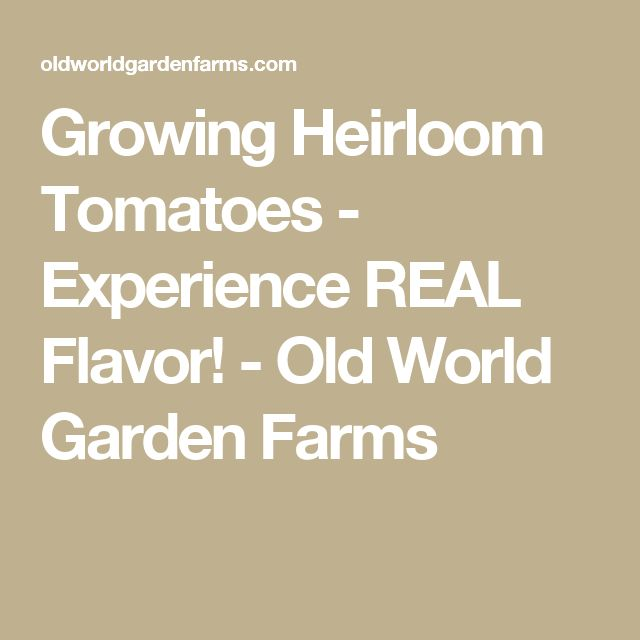 Growing Heirloom Tomatoes - Experience REAL Flavor! - Old World Garden Farms