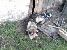 Doge 3