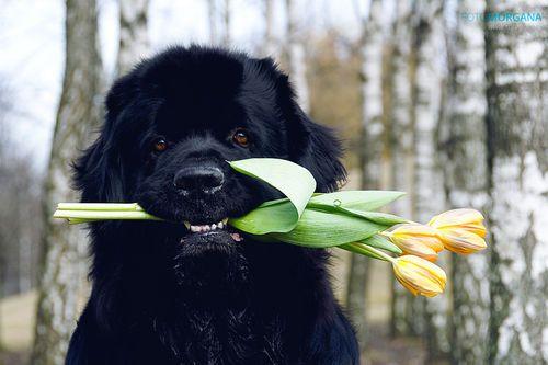 122 Best Well I Ll Be Dog Gone Images On Pinterest