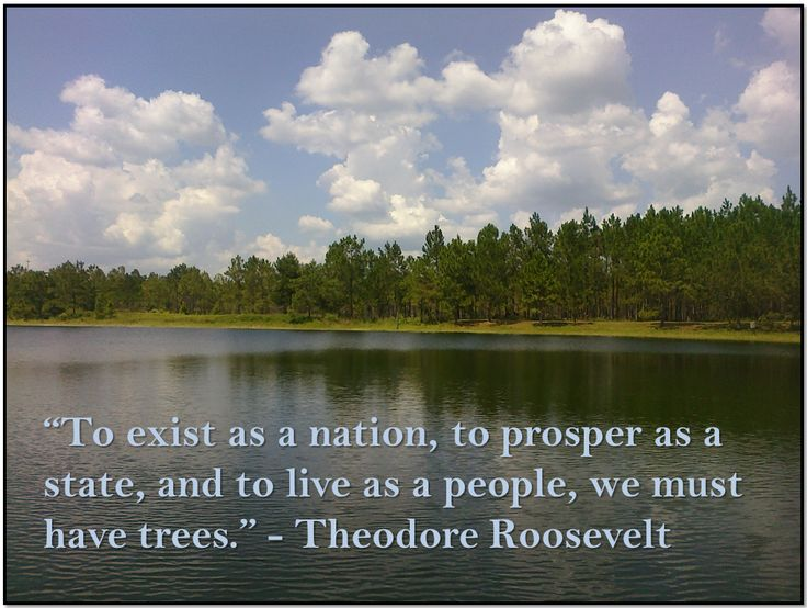 36 best images about T.R. on Pinterest | On september ... Theodore Roosevelt Grand Canyon Quote