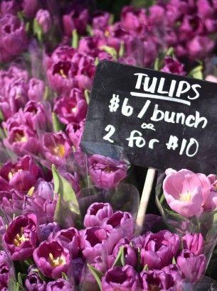 Toronto Flower Market 2015  (4 of 17)