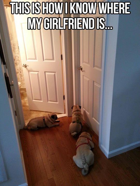 Hilarious!  Dogs - pugs