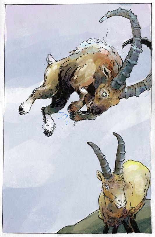 Goats jumping, mountaintop bumping.  Jan Willem Middag
