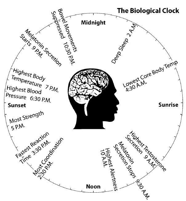 Body's Natural Clock Or Circadian Rhythm May Be a Key To Health and Happiness