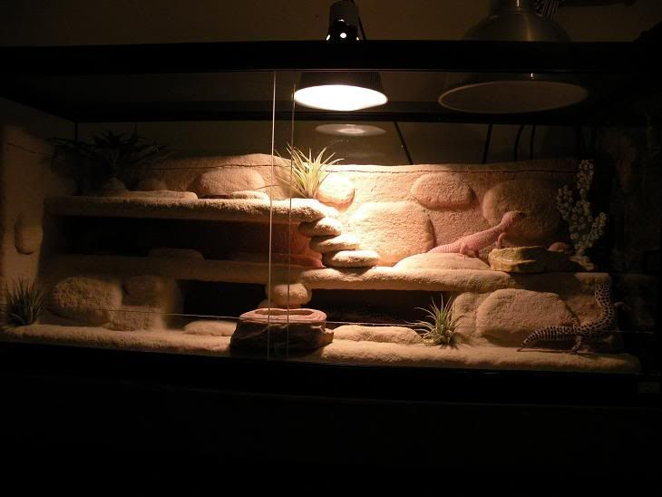 Charming Leopard Gecko Desert Rock Build With Instructions Design Inspirations