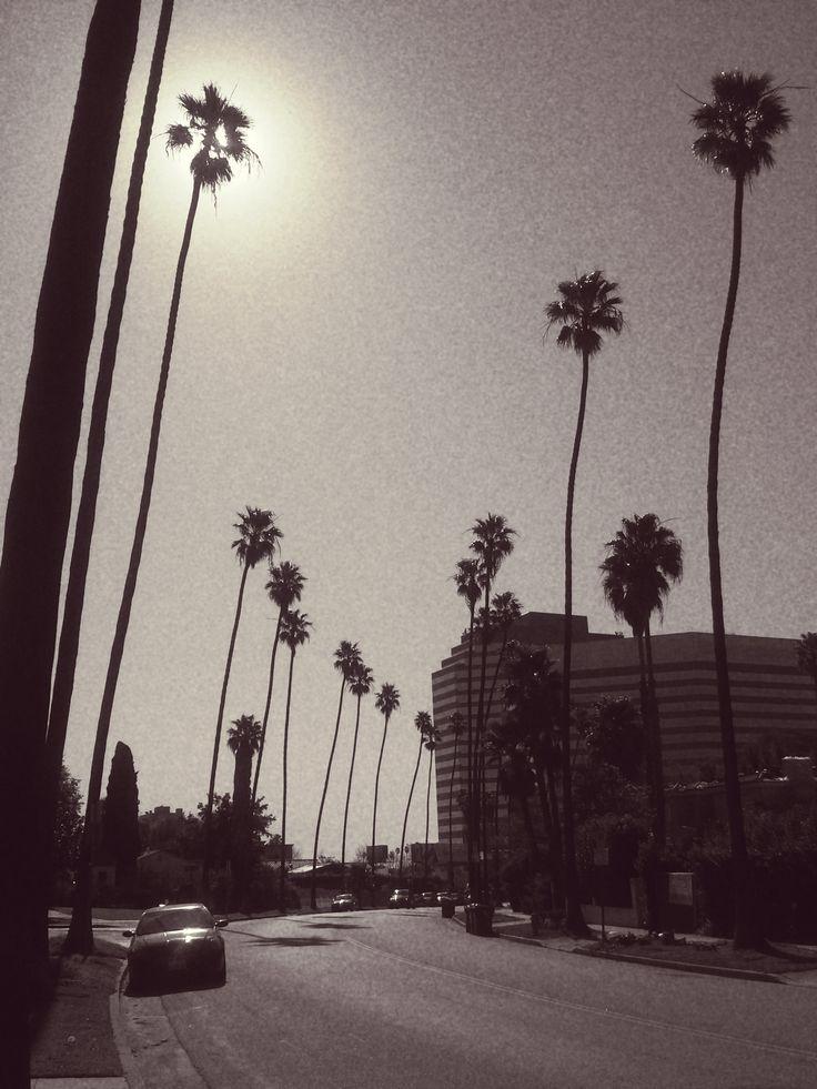 skinny palmtrees in Brentwood