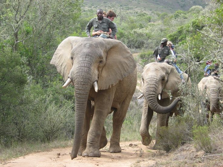 ELEPHANT BACK SAFARI Tour within the historic and spectacular Zuurberg Mountains