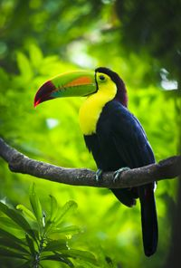 Top 25 Things to Do in Central & South America in 2013: #15. Explore the Panamanian rainforest http://travelblog.viator.com/top-25-in-central-south-america/ #travel