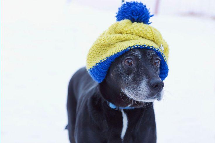 Hund mit Mütze im Feriendorf Holzleb'n im Salzburger Grossarltal   #urlaubmithund #salzburgerland #salzburg #oesterreich #ferienmithund #hundeurlaub #hund #hunde #ferienwohnungen #chalets #ferienhaus #urlaub #hundefreundlich #wellness #grossarltal #wandern #wandernmithund #feriendorf