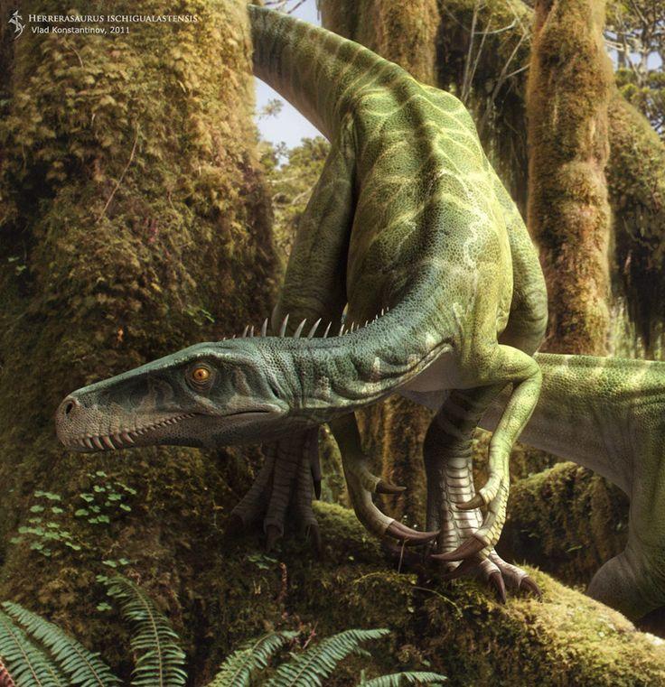 Herrerasaurus Ischigualastensis - by paleoartist Vlad Konstantinov   related: http://en.m.wikipedia.org/wiki/Herrerasaurus_ischigualastensis