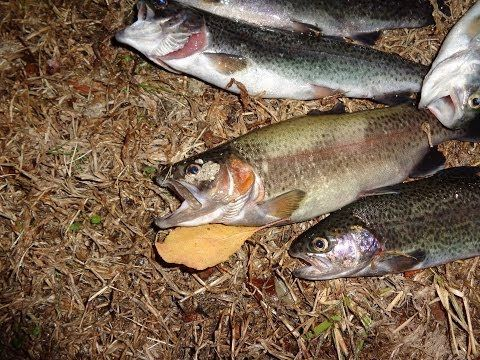 104 best images about trout etc on pinterest how to for Trout fishing with powerbait