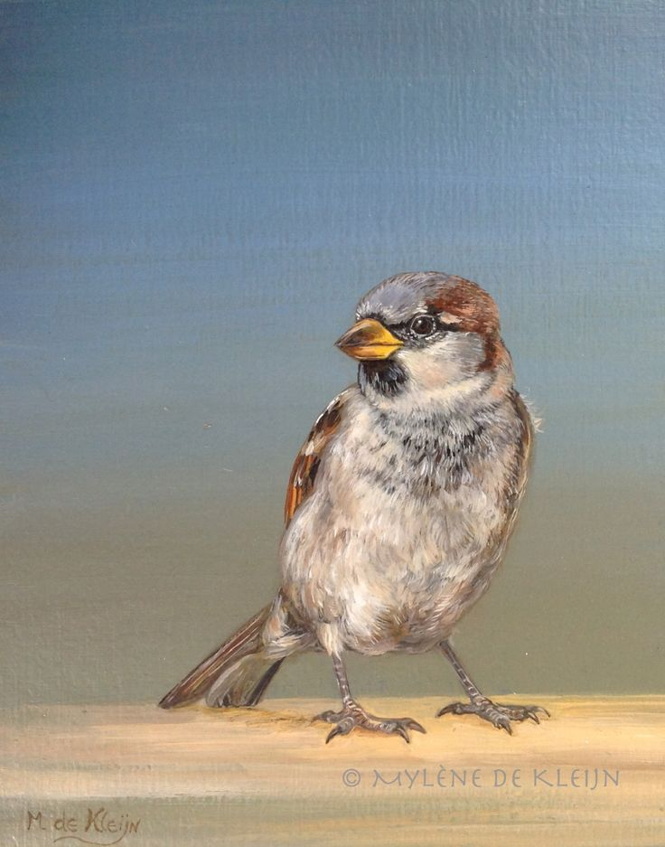 Sparrow 2, small oil painting