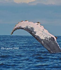 Decidir entre Bahía Solano y Nuquí, es un dilema muy común cuando alguien decide viajar al Chocó o cuando alguien quiere hacer avistamiento de ballenas en estas costas del Pacífico. Yo personalmente pienso que cada uno tiene un encanto especial y que vale la pena conocer los dos, pero si hay que elegir, acá te ayudamos a escoger el mejor destino para ti.