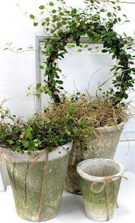 Winter greens in vintage pots