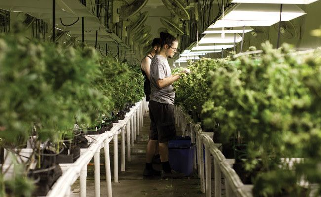 Fusion Properties Management Group Inc. provides real estate, as well as sale/leaseback agreements, which are structured to free up the capital for businesses that is locked up in #realestate, property and expensive tenant improvements. #KendellLang #MMJgrowers #MedicalMarijuana