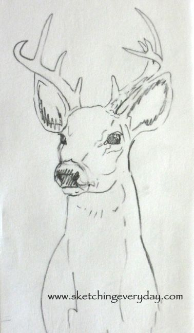 Deer Contour Line Drawing : Best images about deer on pinterest robins fish