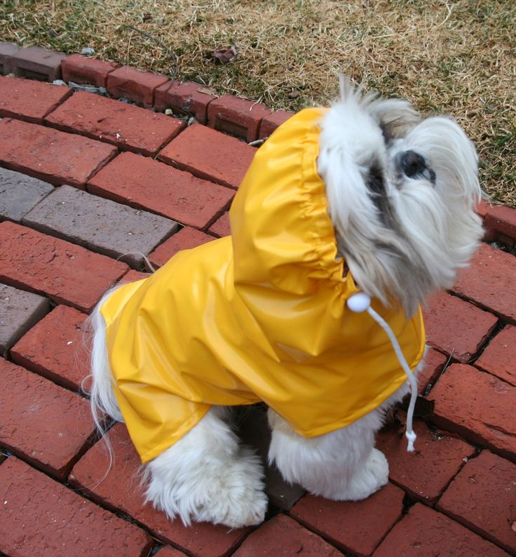 Wet Look Dog Raincoat with Hood -- to be custom made for your small pup. $30.00, via Etsy.
