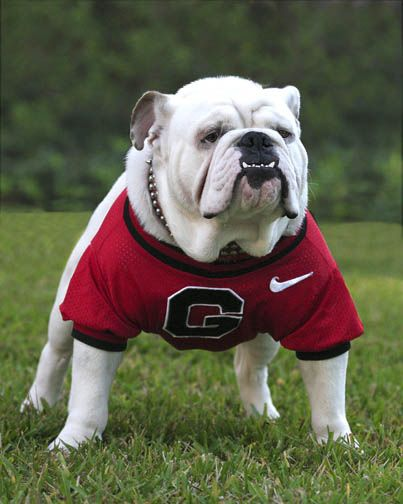 georgia bulldog puppies georgia bulldogs mascot quot big bad bruce quot uga viii live 6029