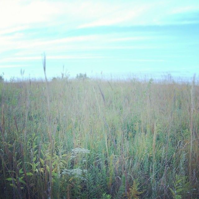 Wetland study site from last semester! #plants #wetlands