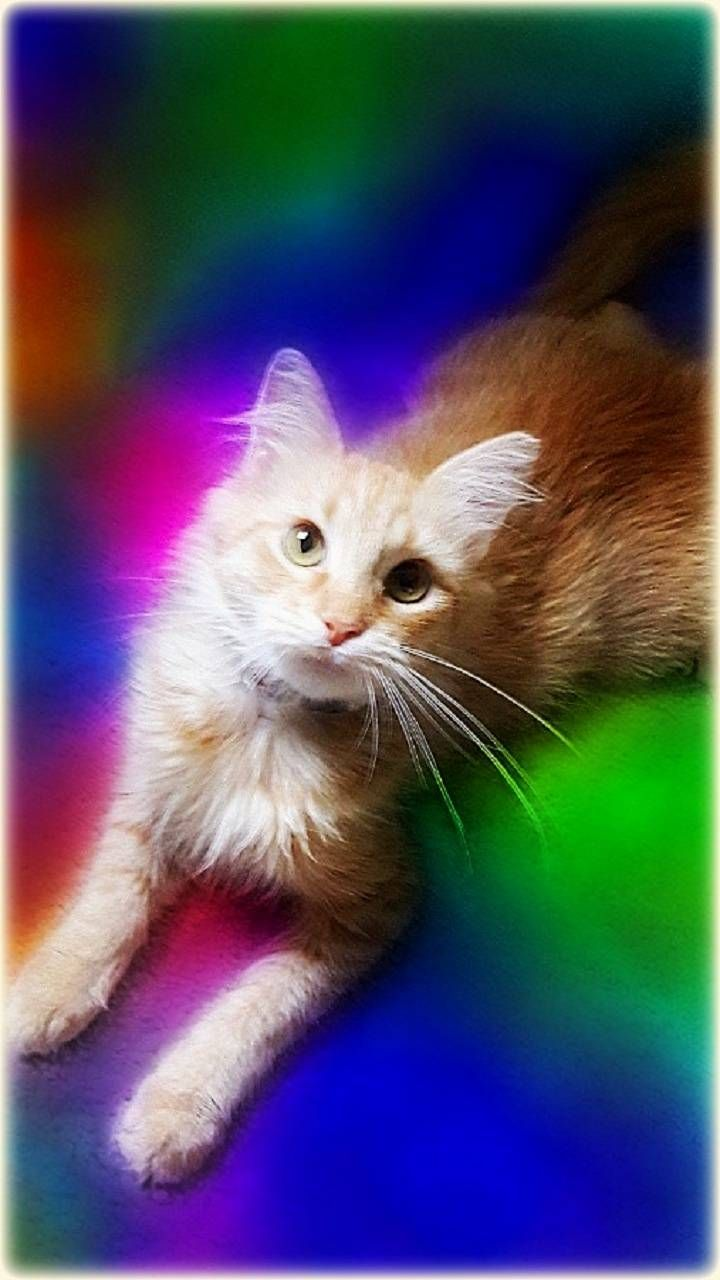 Download Cute Kitty Wallpaper By Roselie14 2f Free On Zedge Now Browse Millions Of Popular Kittens Wallp Cute Cats Cute Cats And Kittens Kitten Wallpaper