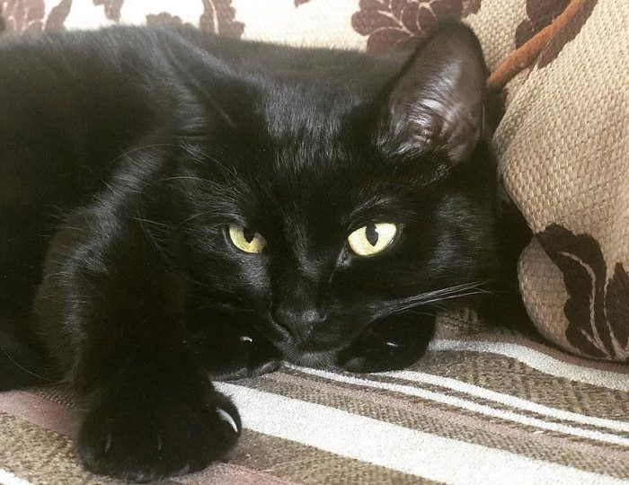 60 Evil Cat Names Evil Cat Cat Noises Cats And Kittens