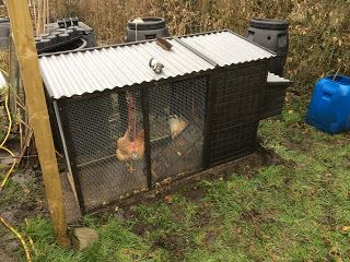 New home for the chickens