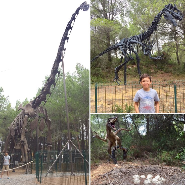 For our latest writing competition we partnered up with Eurocamp to seek out the best adventure stories from our young explorers. Here runner-up Oskar gives us a trip report from his dinosaur hunting in the south of France.