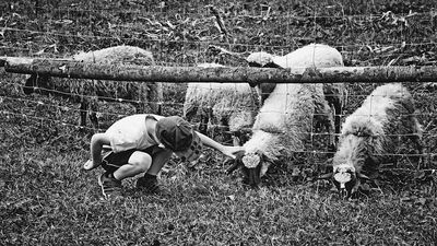 bwstock.photography - photo | free download black and white photos  //  #boy #sheep