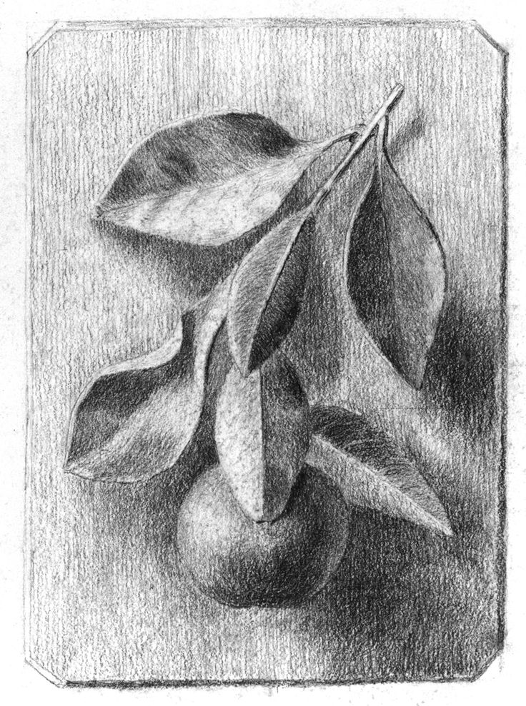 beatrix potter drawings | Beatrix Potter, Still life drawing, probably an exercise in design for ...