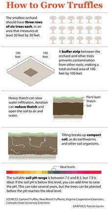 Tips on growing truffles. thumbnail
