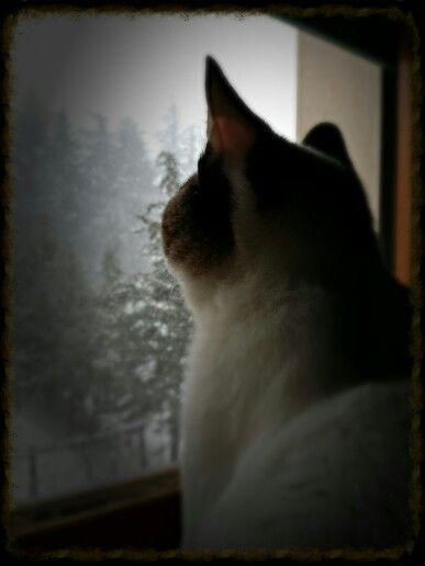 #cat #window #snow