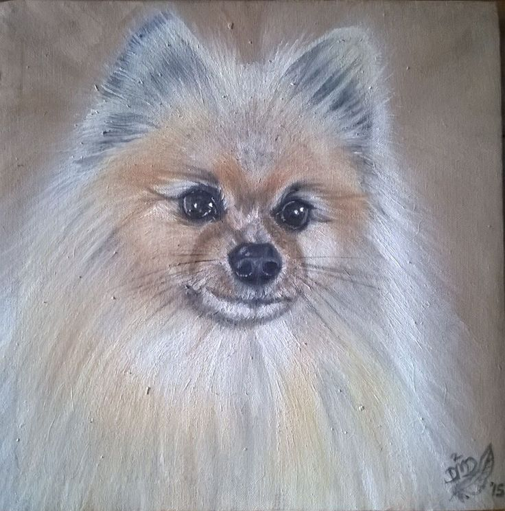 Pomeranian 3 {Commission} ~ Block Mounted Framed Oil Painting by Dawn Du Preez #DawnDuPreez