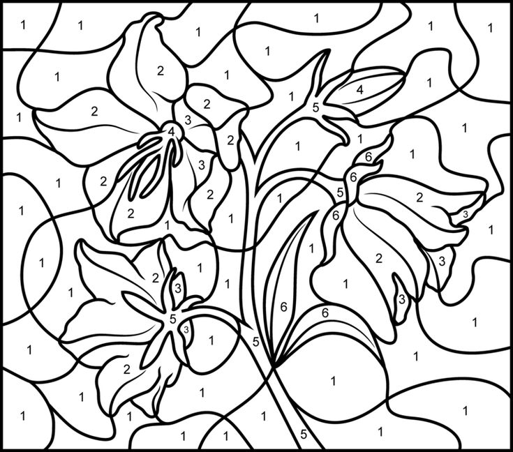 Elegant Color By Number Coloring Book