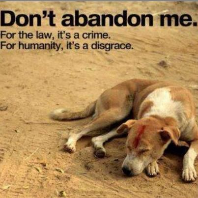 """stricter punishment for animal cruelty essays Argumentative essay - animal cruelty  """"enforcement is poor and penalties for infringement [is] low"""" ( """"laws should be updated to save pets from abuse"""", 2011, ¶2) putting stricter laws into practice like charging the offender with a higher amount can hinder people from causing unnecessary sufferings to animals due to the effect of."""