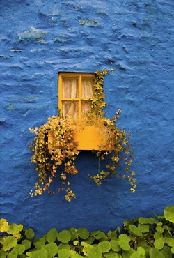 yellow window: Doors, Colors Patterns, Windowbox, Yellow Window, Blue Wall, Vibrant Colors, Deep Blue, Wall Texture, Window Boxes