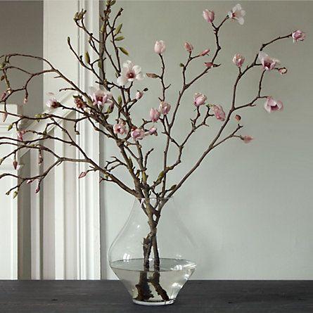 magnolienfrühling