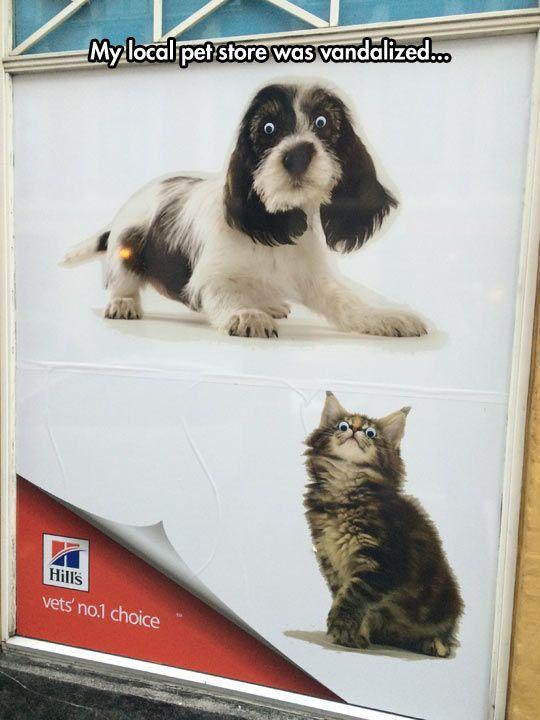 Vandalismus oder Brillanz – Lustig – #Brillanz #Lustig #oder #Vandalismus   – Animal Memes