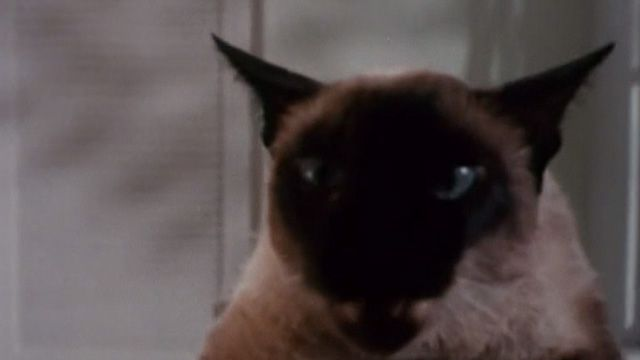 """A Siamese cat named Baby Doll is one of many cats who suddenly turn on their owners after eating Lotus Cat Food (""""For Cats Who Love People"""") in The Corpse Grinders (1971)."""