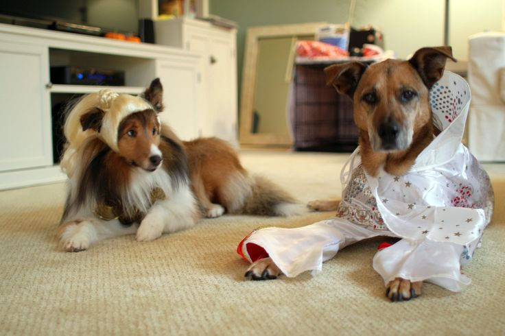 6 Funny Dog Halloween Costumes You Can Make With Little Or No Sewing   Fun Times Guide to Dogs