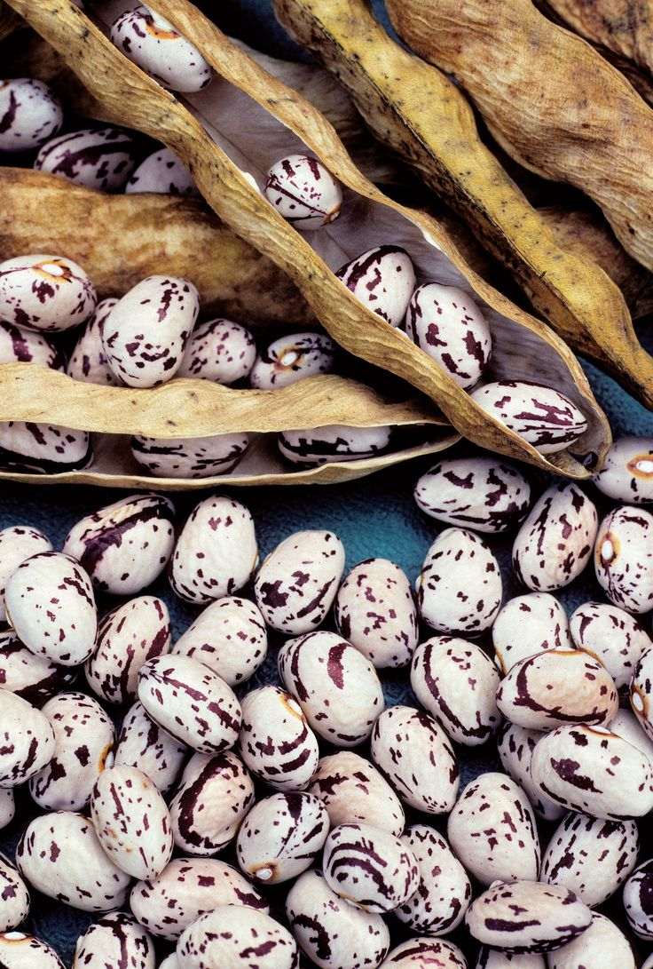Saving Seeds: 7 Reasons Why and Dozens of Tips for How - Organic Gardening - MOTHER EARTH NEWS
