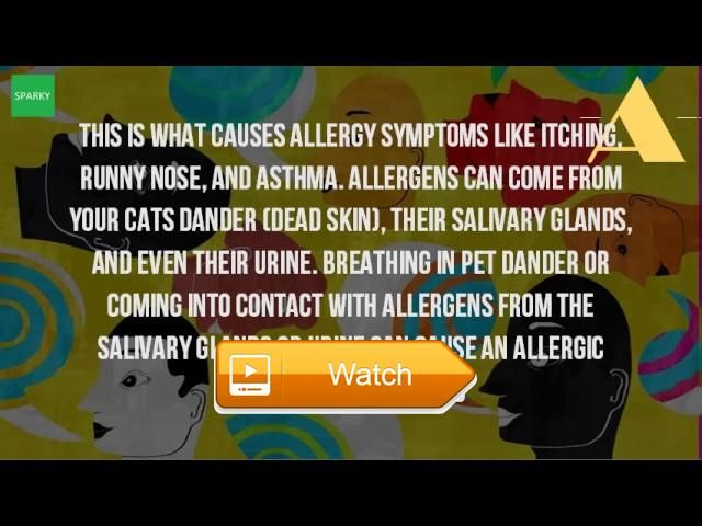 What Causes Allergies To Cats  Cat allergies symptoms treatment healthline However cats often have multiple read on to learn about the most common allergies in cats what symptoms of  on Pet Lovers
