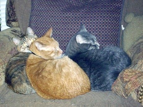 Is your cat an expert napper? The people of the Bloomfield