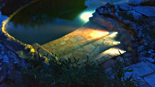 @N8: Swim Ponds, Blog