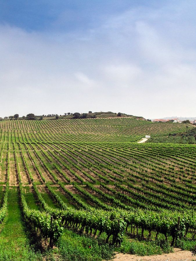 Endless Alentejo - Portugal vineyards
