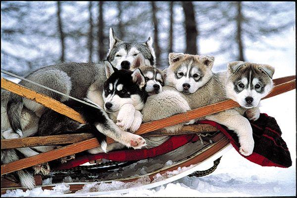 Les vacances à la neige, c'est super !