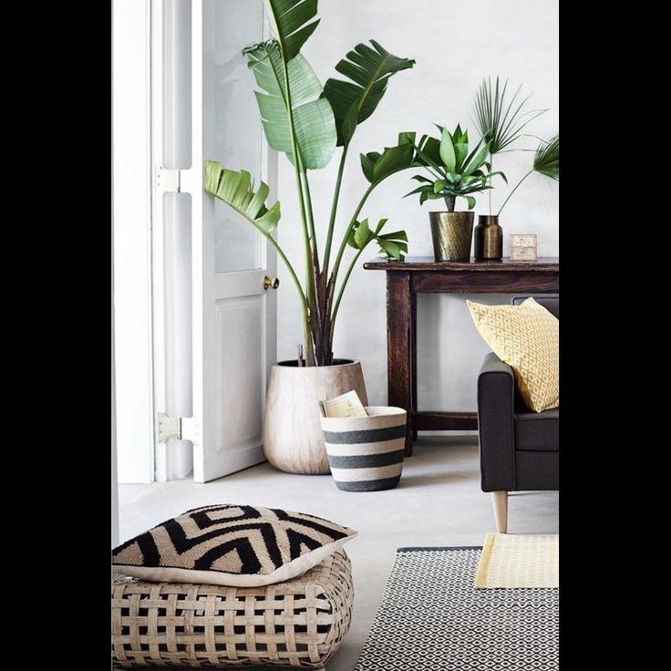 Πώς να διακοσμήσεις το σπίτι σου με μεγάλα φυτά εσωτερικού χώρου