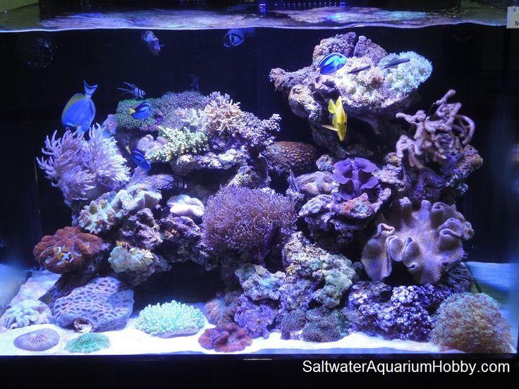 how to setup a saltwater fish tank filter