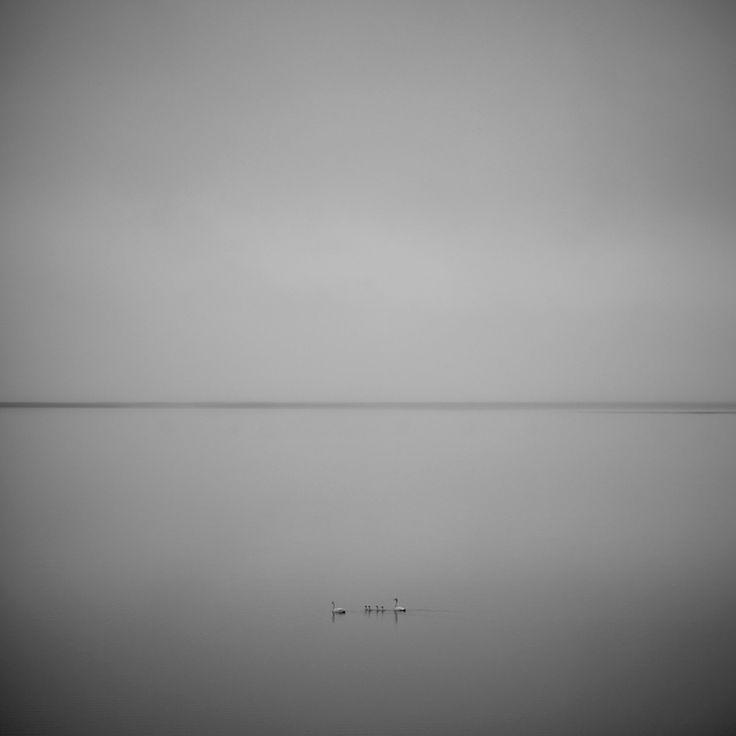 Swan Minuit sur la route 1 d'Islande, il fait encore jour mais le silence de la nuit est bien là. Une étrange atmosphère s'empare des lieux, la vue est sublime ; la lagune se fond avec l'océan et le ciel gris, comme un dégradé de nuances de gris. Lorsque tout à coup, sortie de nulle part, une famille de cygnes se place devant mon objectif. Clac clac c'est dans la boîte ! #islande #swan #cygne #black #white #Iceland