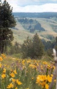 Blue Mountains Oregon